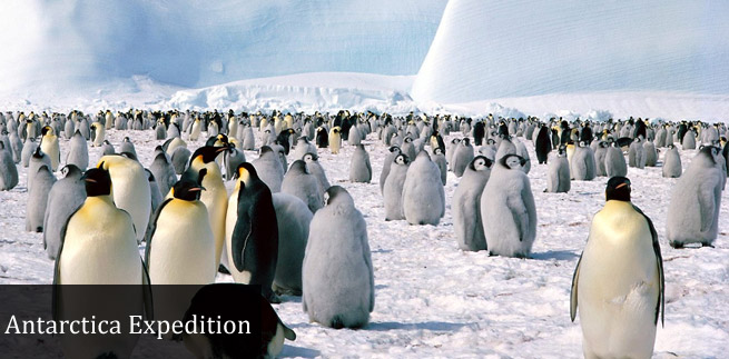 Antarctica Tour Packages